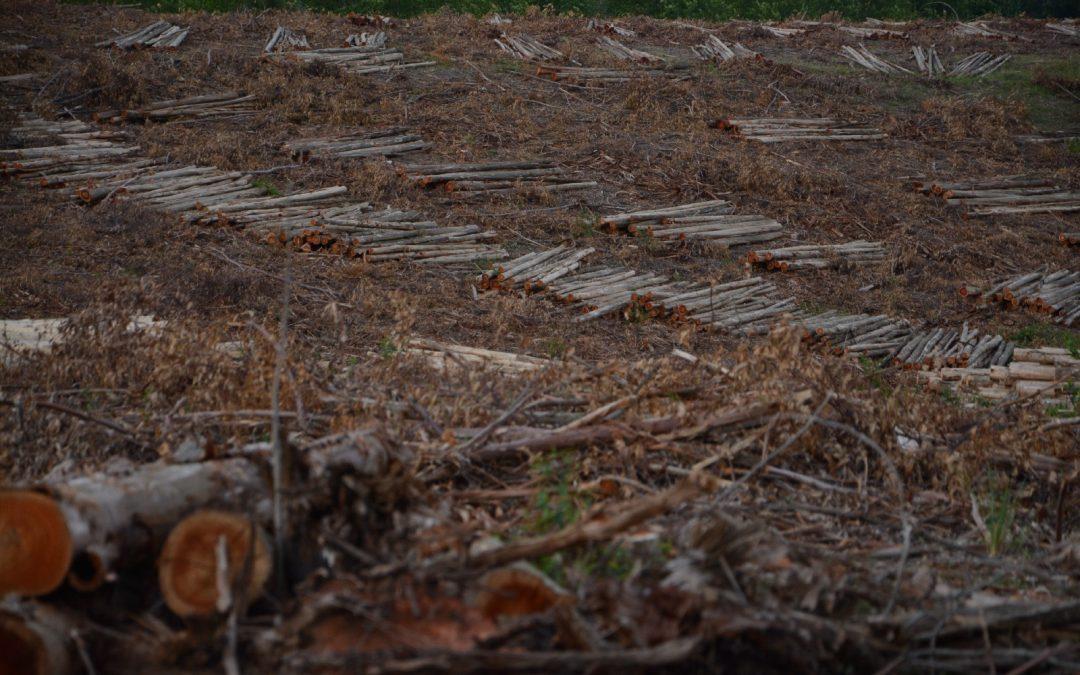 """""""Mercado Verde: a Financeirização da Natureza"""""""