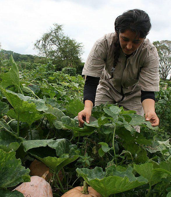 Inversiones y liberalización al servicio del agronegocio. Respuestas de la agroecología para salir de la encrucijada