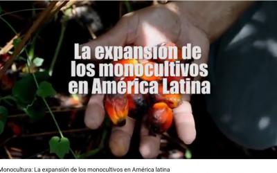 """Documental: """"Monocultura: La expansión de los monocultivos en América latina"""""""