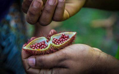 La gestión de los territorios y la producción de alimentos de comunidades tradicionales en foco