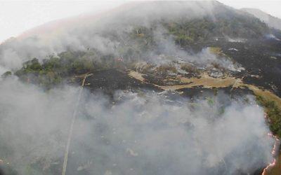 Es el neoliberalismo lo que hace arder el Amazonas